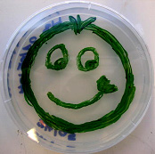 synecho petri dish